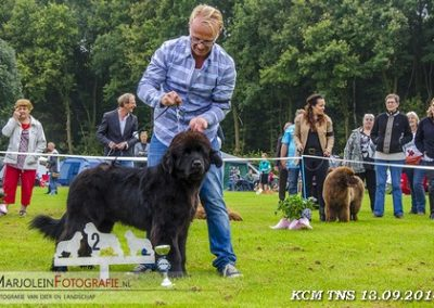 kcm-14-deel-2--2--Daan-of-the-Weeping-Willow-2e-puppy-klasse-reu